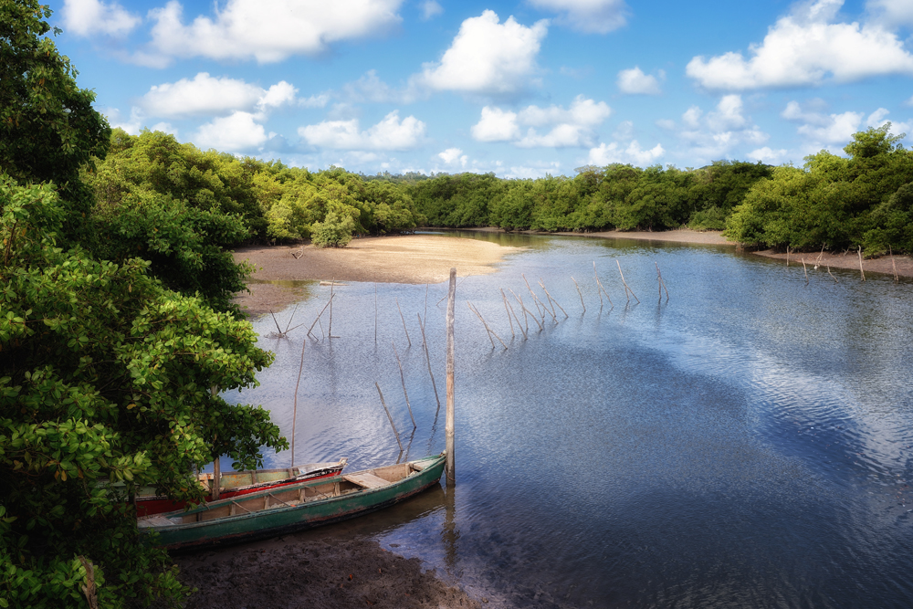 Blick auf die Mangrovensümpfe - Foto: Wolfgang Besche ©